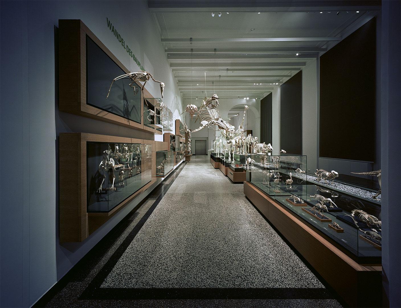 Hessisches Landesmuseum Kardorff Ingenieure Lichtplanung, Zoologie