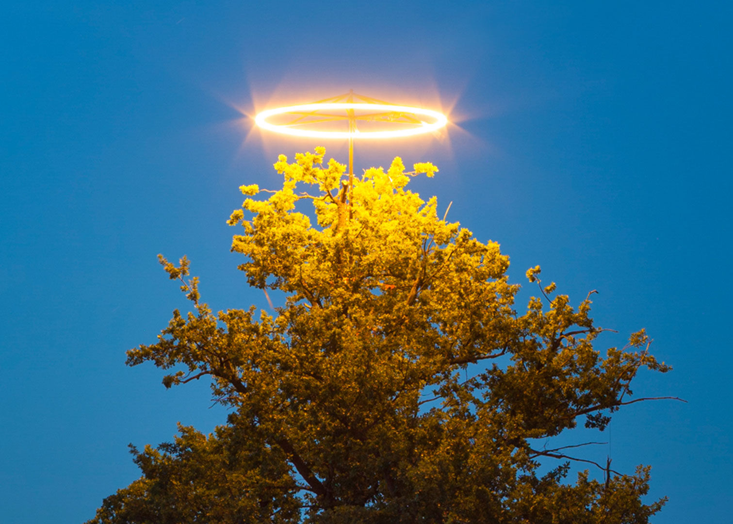 Lighted ring above a 150 year-old oak, Monika Goetz
